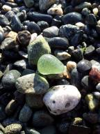 Lime Green Sea Glass Nugget