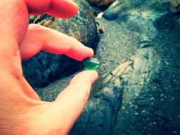 Teal Green Sea Glass Find
